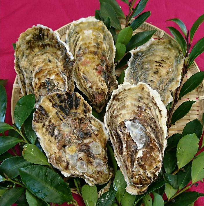 大粒 殻付き牡蠣